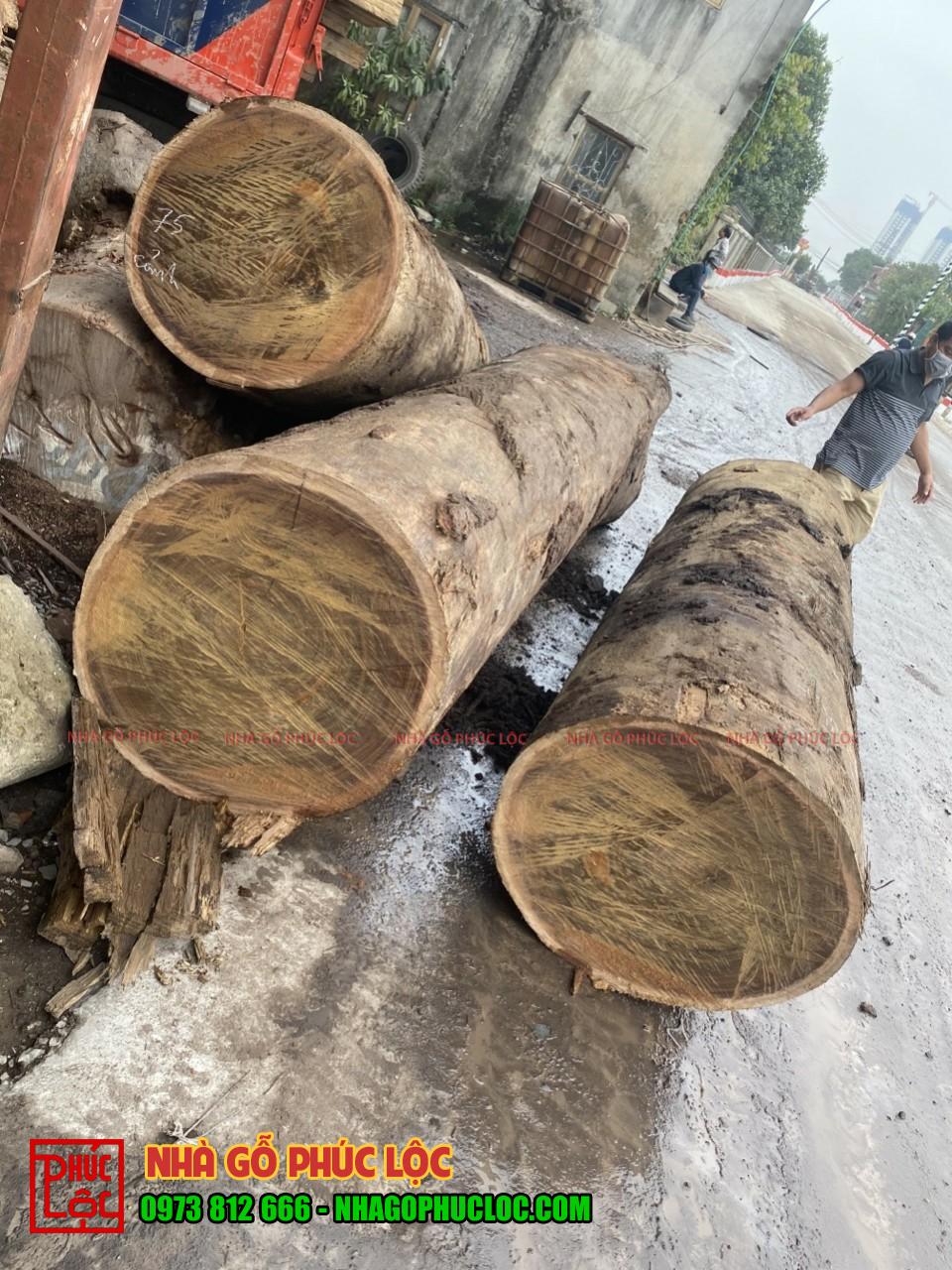 Hình ảnh gỗ lim Nam Phi