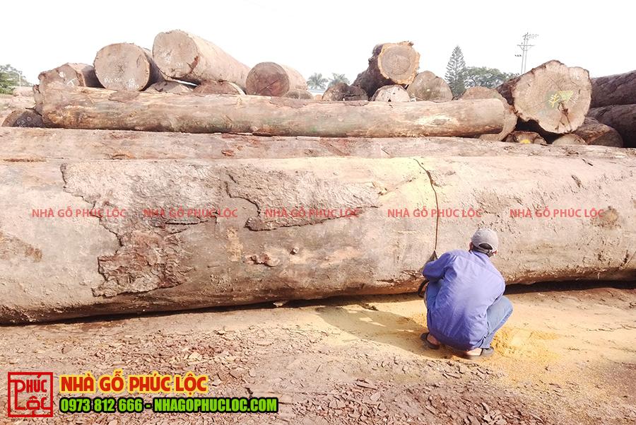 Bãi gỗ lim Nam Phi gồm nhiều cột gỗ to