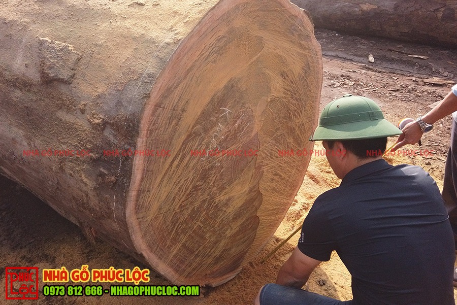 Thân gỗ to được cưa xẻ để chuẩn bị xẻ cột không ôm tâm