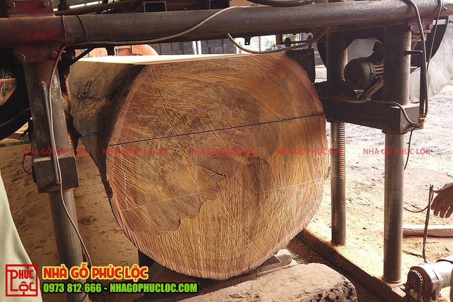 Cột gỗ to được đặt lên máy chuẩn bị cưa xẻ
